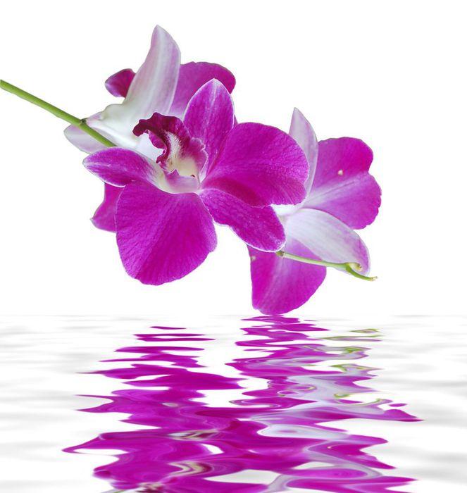 Самые красивые цветы в мире  Очень много ФОТО
