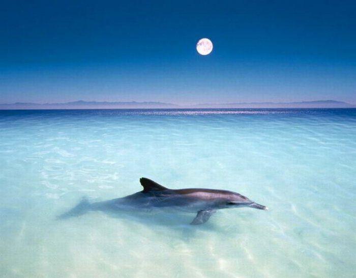 Фото пляж песок море