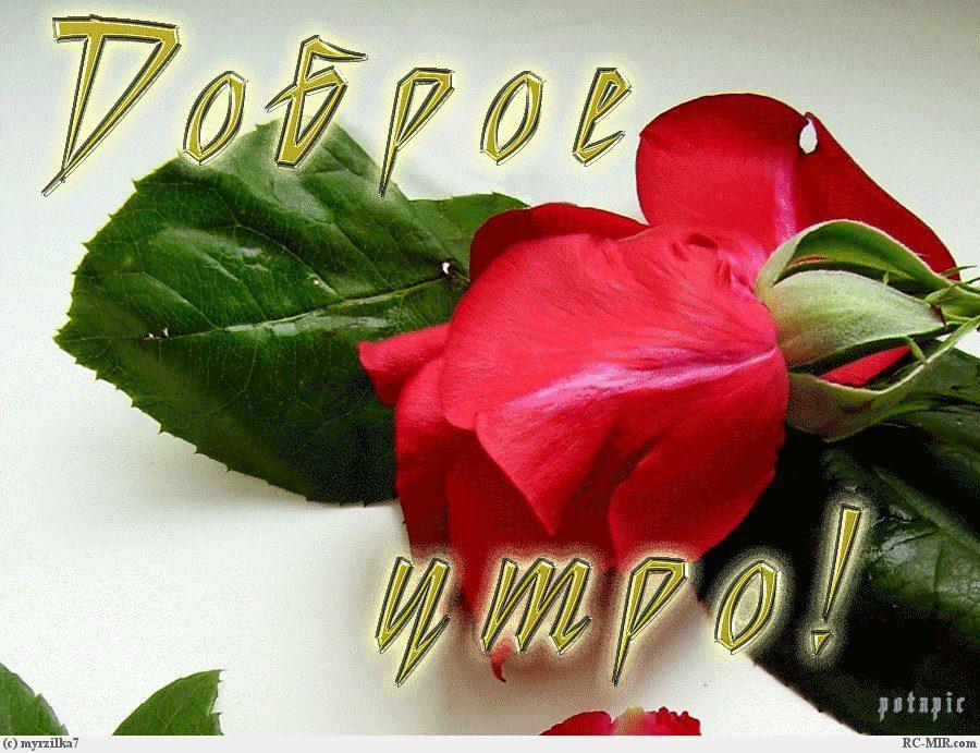 Доброе утро девушке цветы картинки