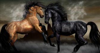 Картинки красивые лошади (37 фото)