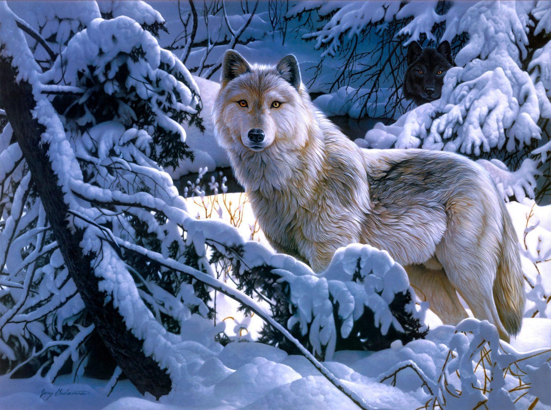 зимние картинки с волками всё потому, что
