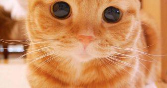 Картинки красивые с кошками (35 фото)