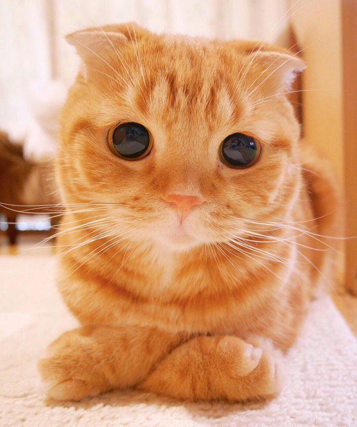 Картинки с кошками про любовь