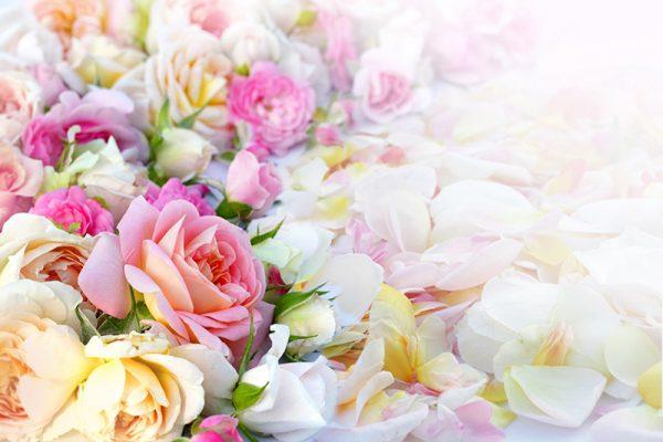 Фото цветов роз букет