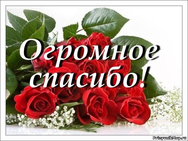 Интернетмагазин цветов в Омске Florida55