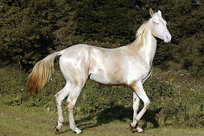 Лошадки фото картинки
