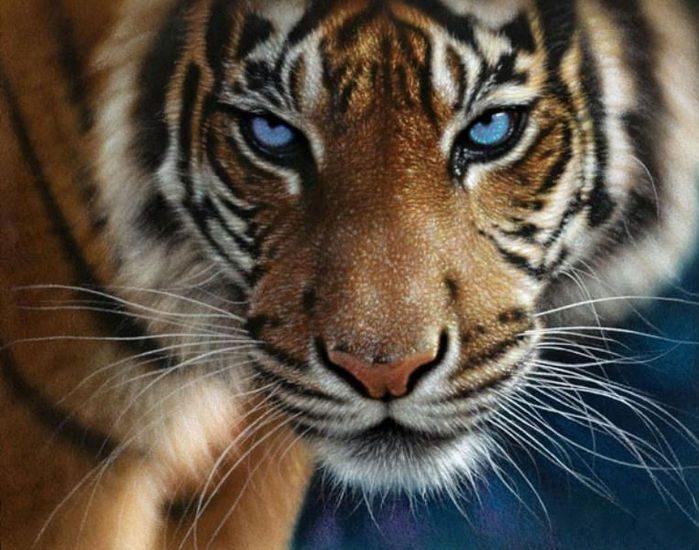 фото на аву тигр