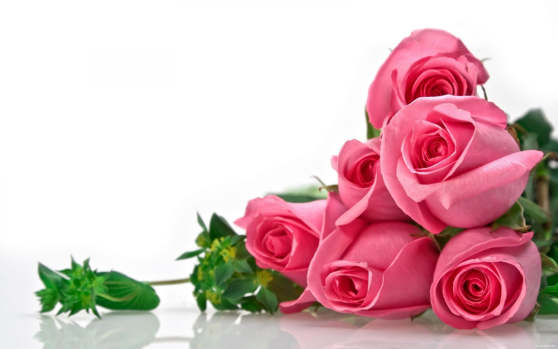 Картинки цветы на белом фоне красивые