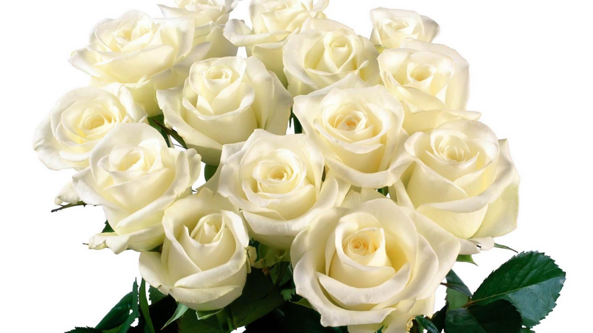 Герберы и розы букет фото