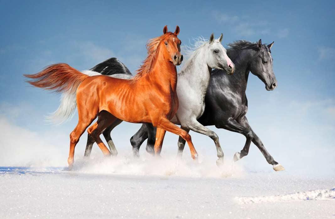 онлайн лошади ставка