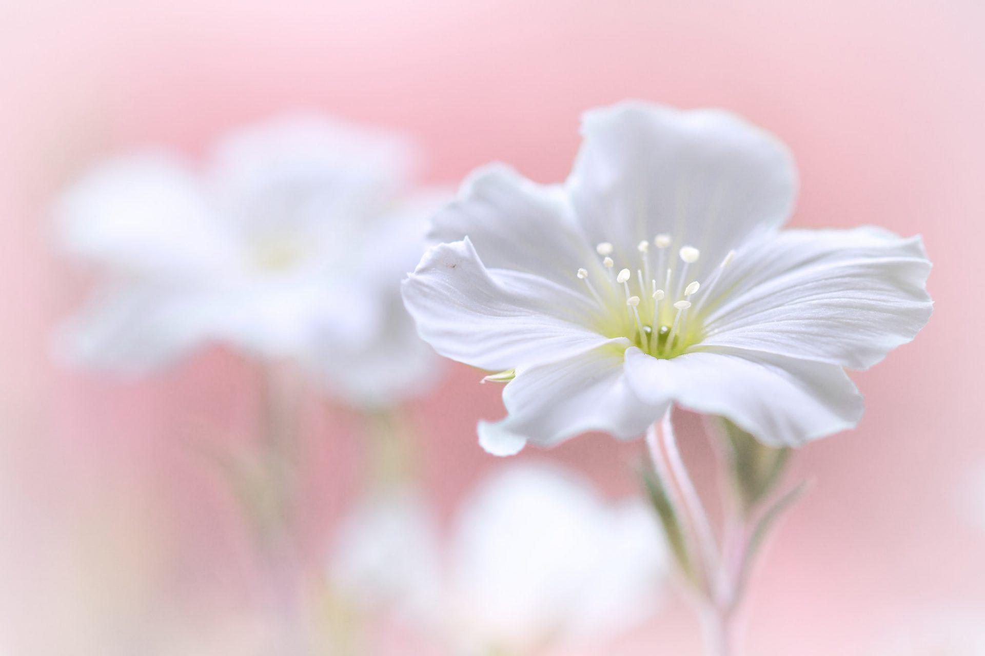 Картинки букет цветов нарисованные