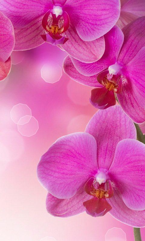 Картинки бесплатно живые цветы