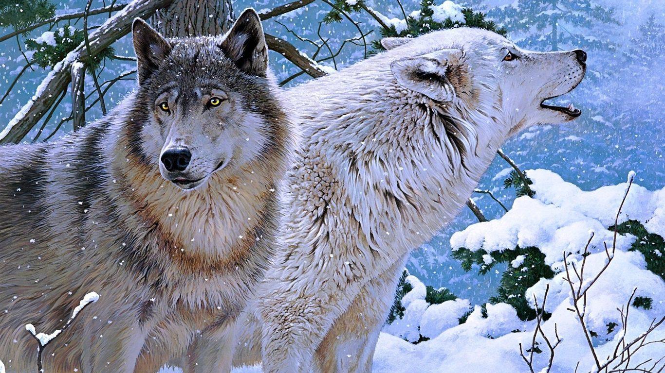 волчица зимой картинки вареники мукой, укладываем