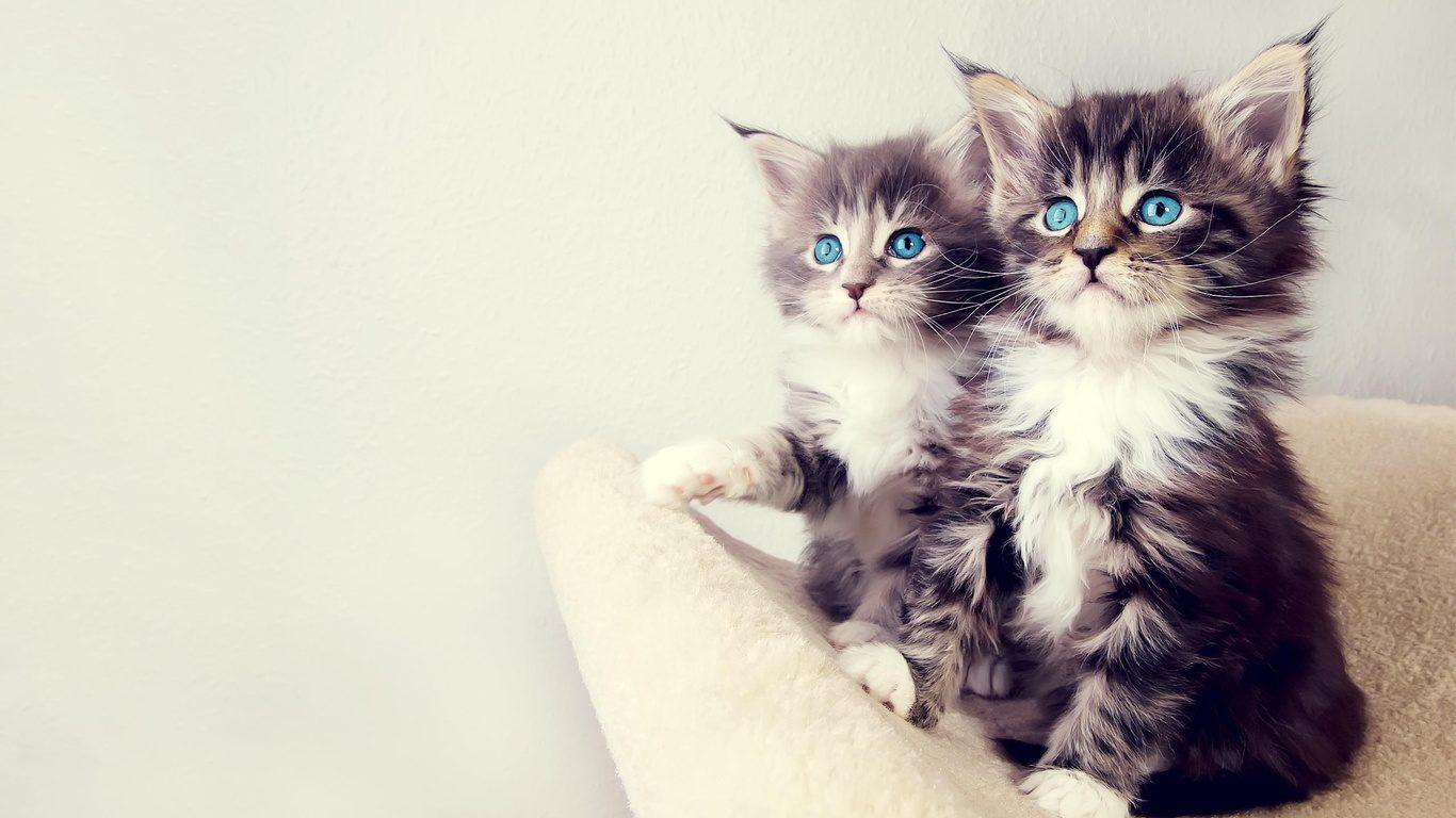Картинки с надписями на телефон кошек