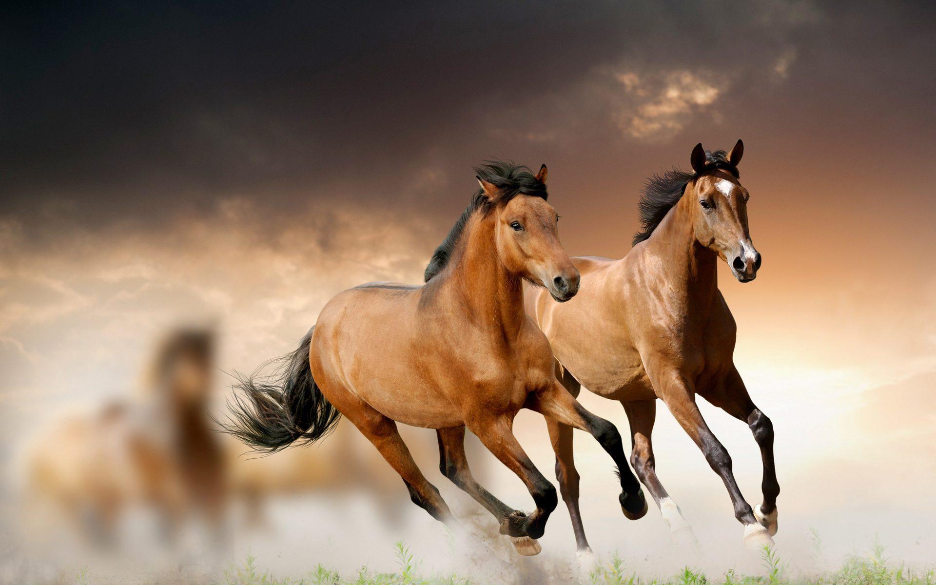 увидеть лошадки картинки фон томные