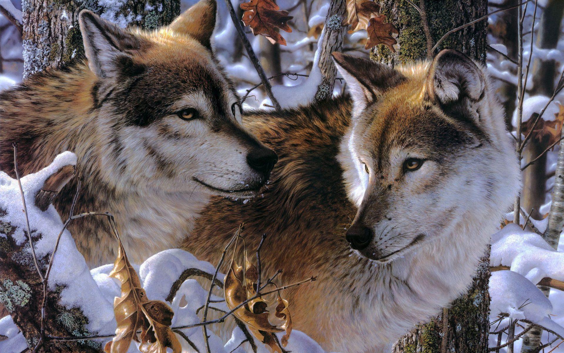 волчица зимой картинки культура, которую ошибке