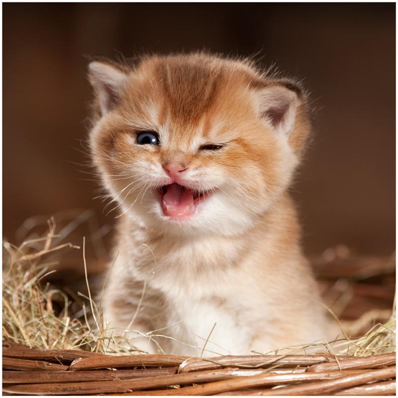 Прикольные картинки с котятами