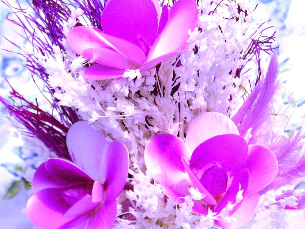 Фото тюльпаны поле
