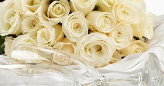 Красивые картинки белые розы (35 фото)
