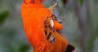 Картинки красивые птицы (35 фото)