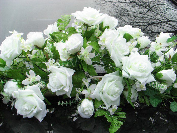 Красивые букеты из белых роз фото полевых ромашек многолетние