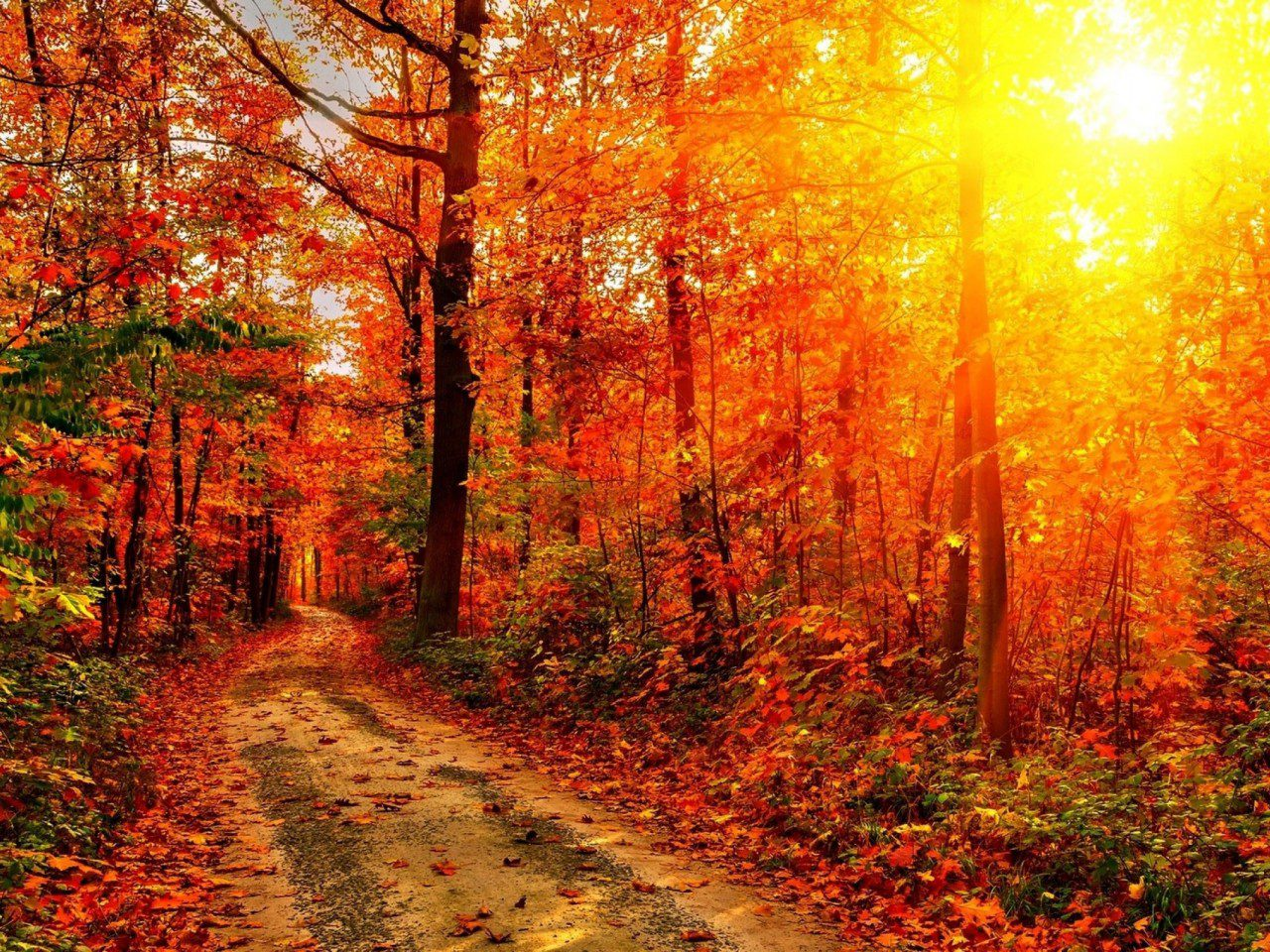 Фото яблоки осень