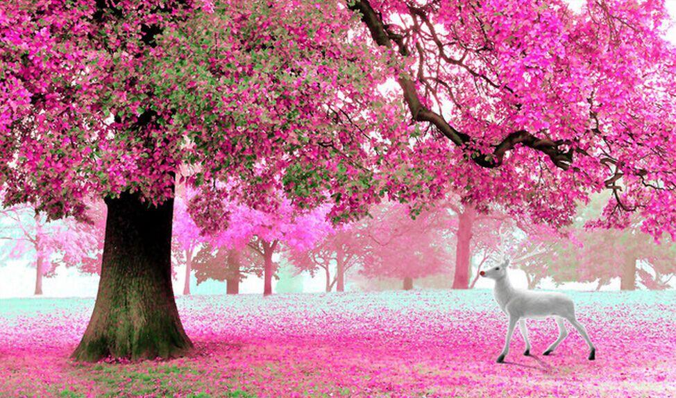 Красивые орхидеи фото и картинки