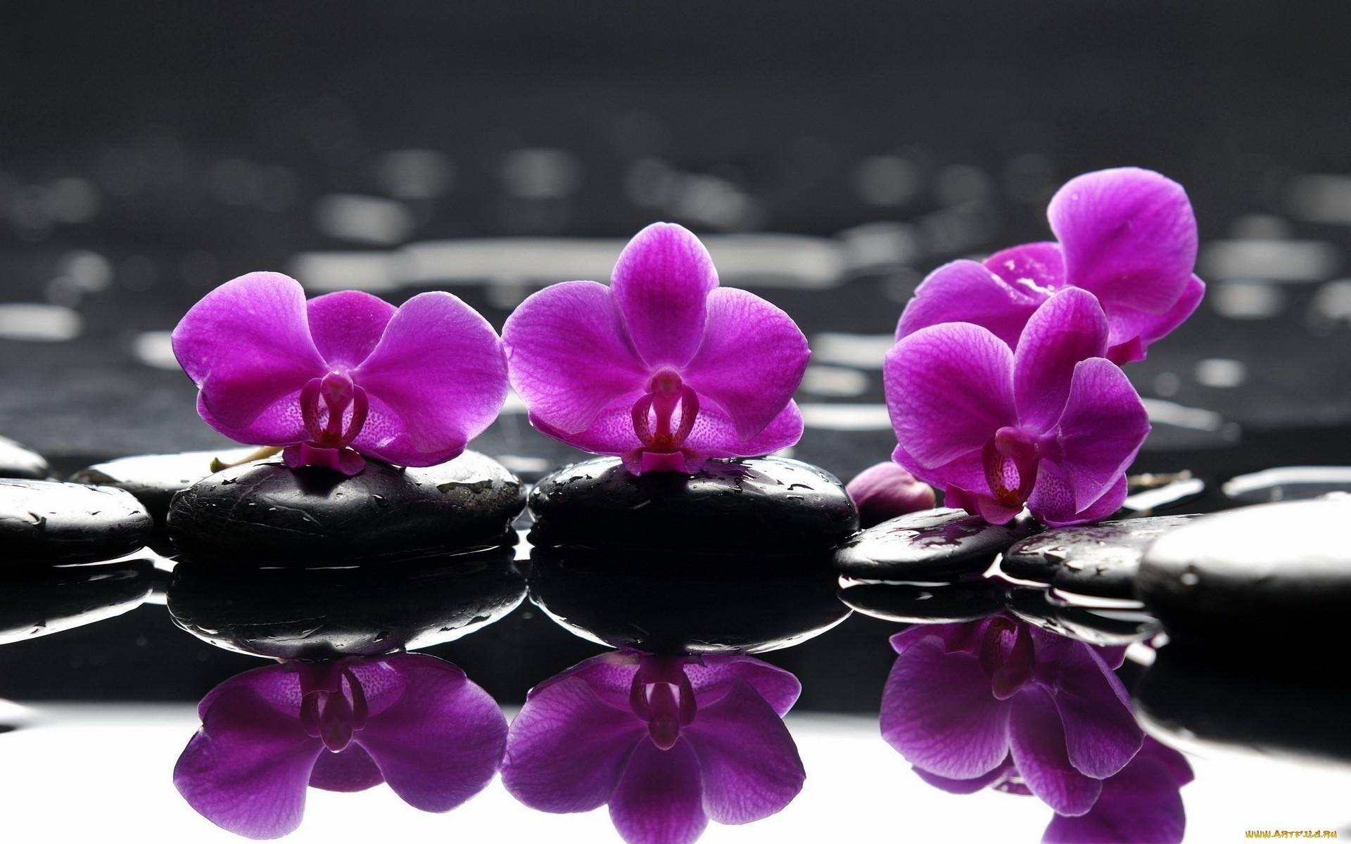 Обои На Рабочий Стол Орхидеи Красивые Большие
