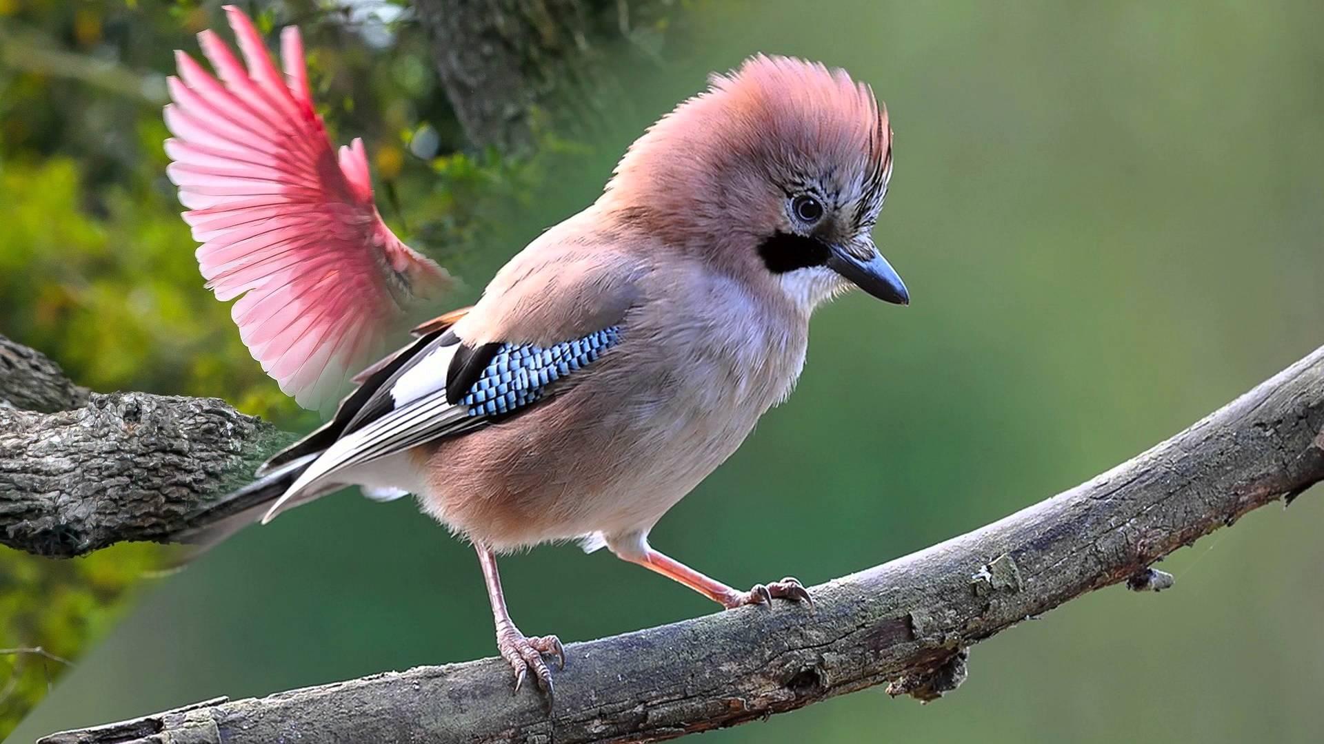 Смотреть красивые картинки птиц