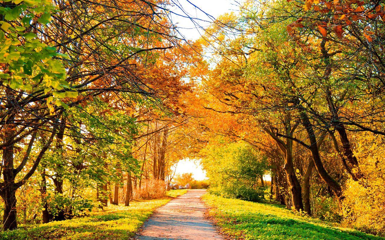 Фото Красивая Осень На Рабочий Стол