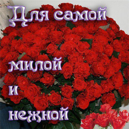 Картинки розы красивые с надписями