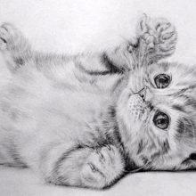 Картинки красивые нарисованные кошки (35 фото)