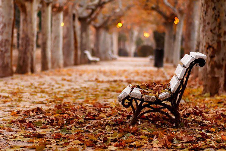Обои Девушка танцует в листьях листья девушка для