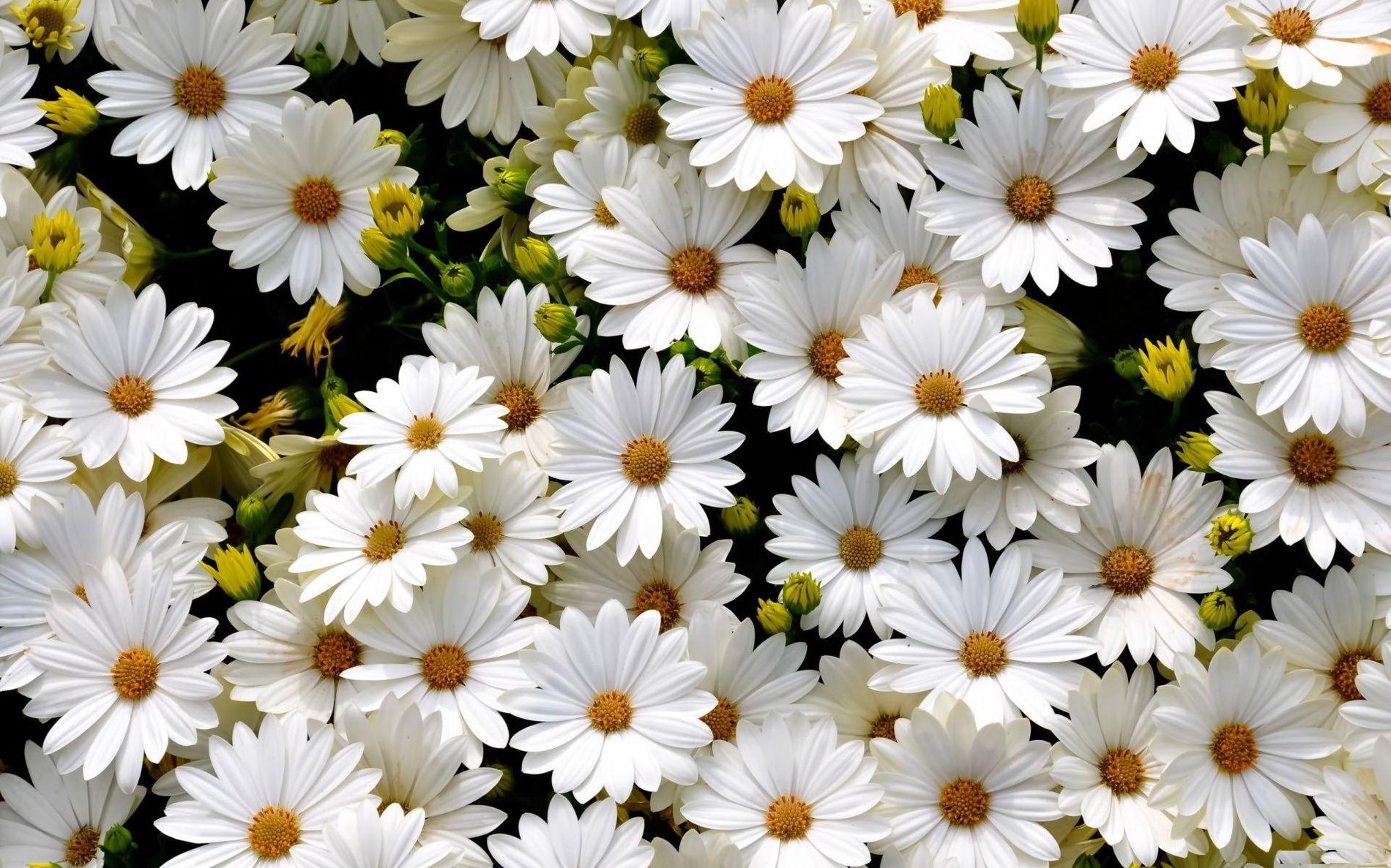 Картинка цветочки фото