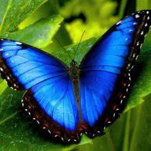 Картинки красивые цветы и бабочки (35 фото)