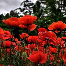 Картинки  красивые цветы 1366х768 (65 фото)