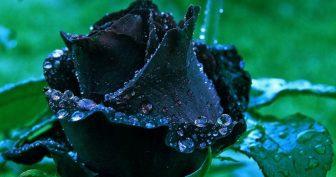 Картинки красивые чёрные (35 фото)