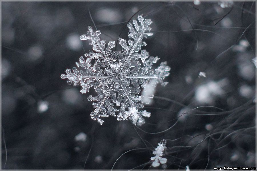 Картинки настоящей снежинки