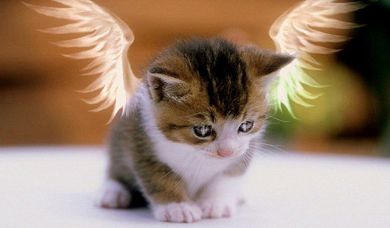 с милые котенком фото