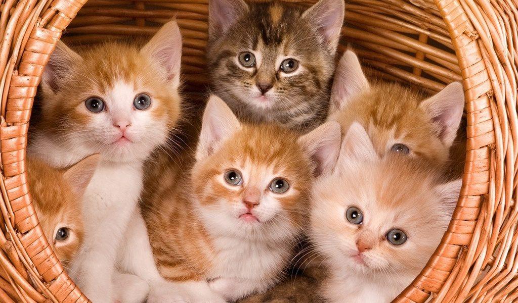 Коты и котята фото и картинки