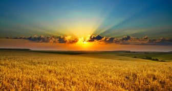 Картинки красивое утро (35 фото)