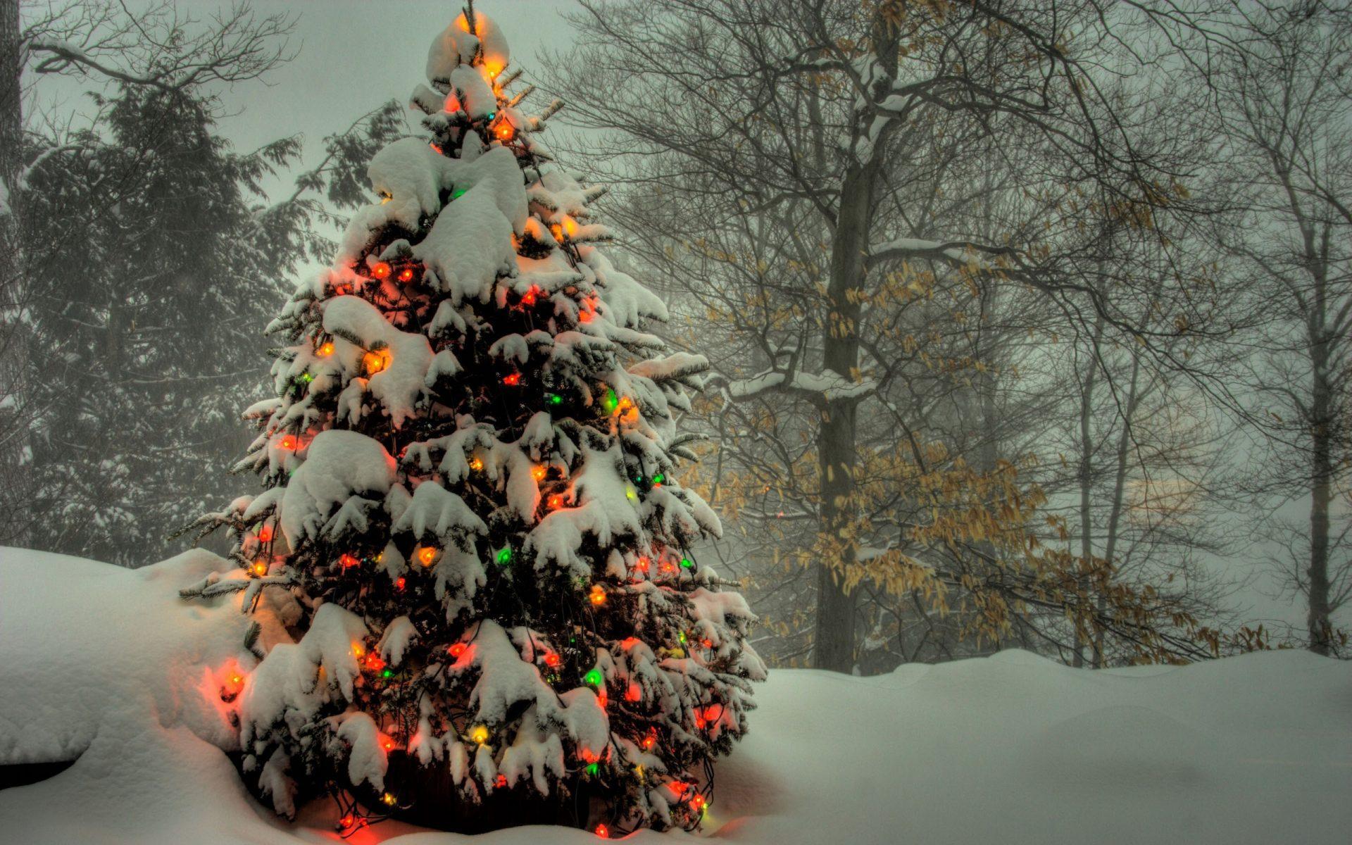 история картинки на рабочий стол зима елка на весь экран здоровья