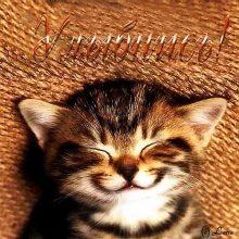 Картинки смешные красивые и милые про котят (35 фото)