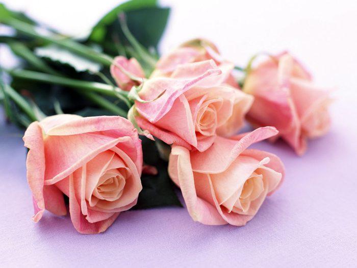 обои на рабочий стол красивые большие на весь экран бесплатно цветы как оплатить кредит через номер телефона