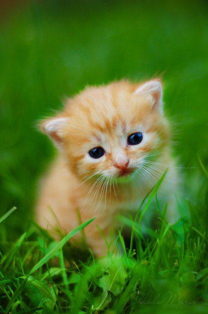 Картинки кошка с котенком