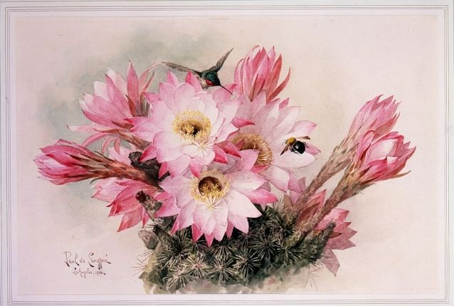 Картинки про цветы прикольные 44 фото  Прикольные