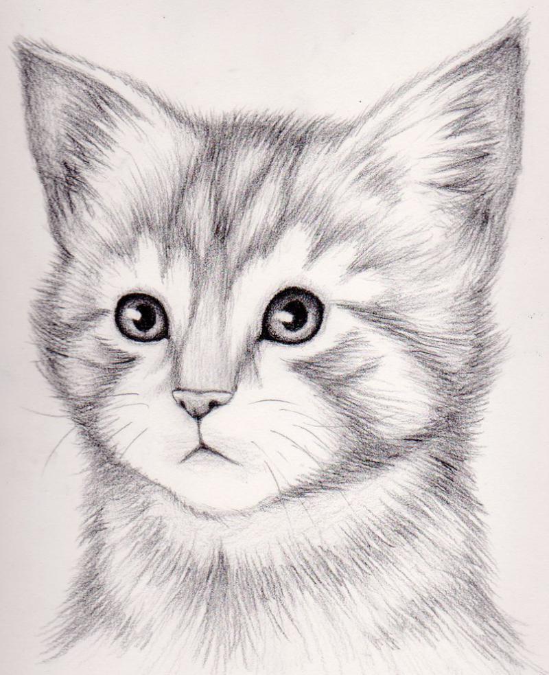 Красивые картинки карандашом животные легкие