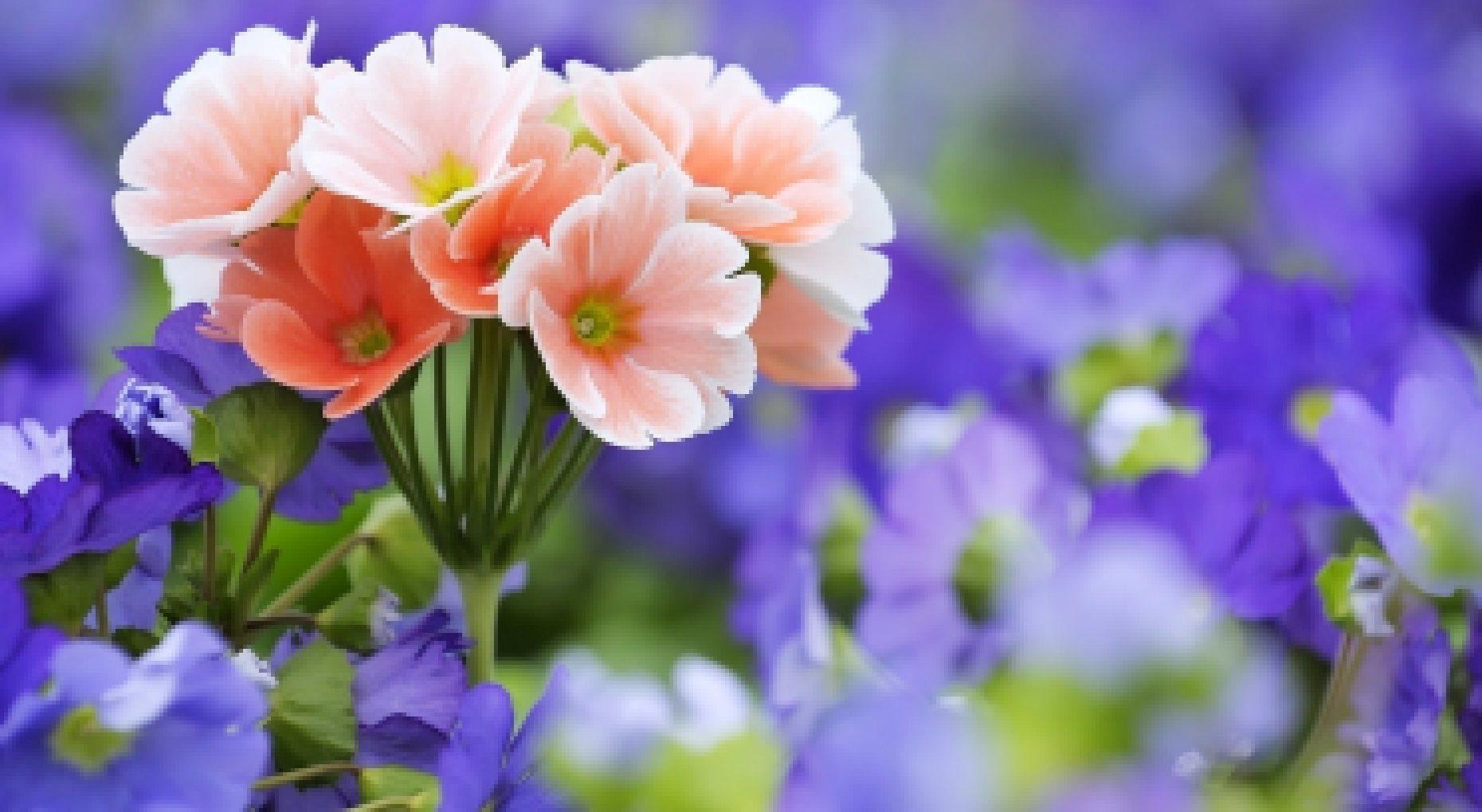 Маки цветы полевые