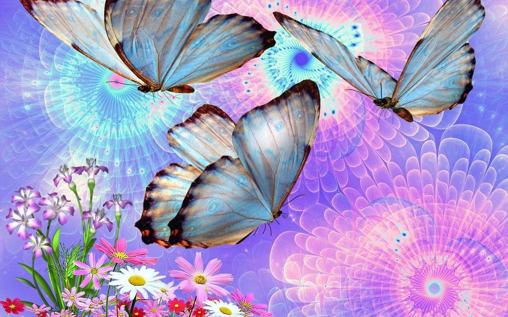 37 карточек в коллекции фотографии природы: розовые ромашки »