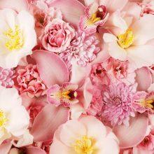 Картинки  красивые цветы 1366х768 (35 фото)